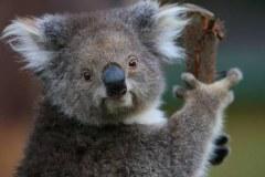 Zoo de Melbourne