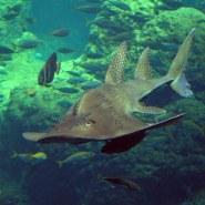 Aquarium de Melbourne Sealife