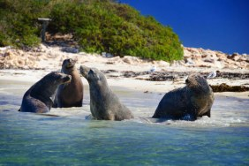 Ultimate Aussie Wildlife Tour