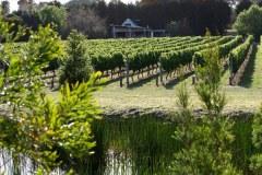 Rượu nho Merricks Creek ở Mornington