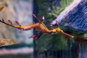 Sự kiện đặc biệt After Dark tại Sealife Aquarium